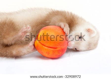 Young ferret playing with a peach - stock photo