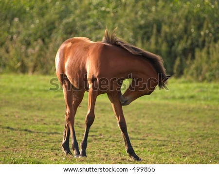 Young foal in a field - stock photo