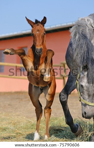 Young foal with his mother - stock photo