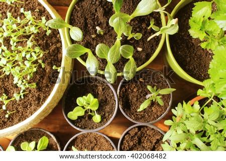 Young fresh seedlings - stock photo