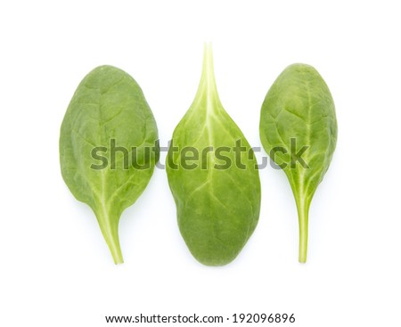 young fresh spinach leaves isolated on white background