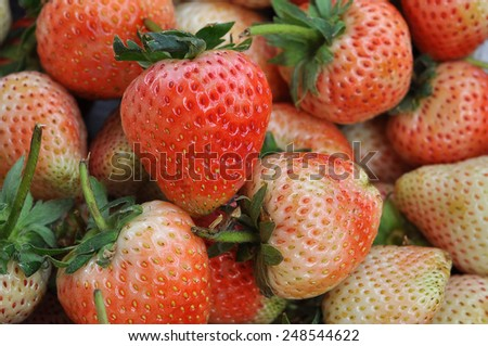 Young fresh strawberry after harvest in agricultural - stock photo