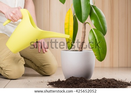 Young gardener pouring plant while transplanting it in fertile soil and new big flowerpot - stock photo
