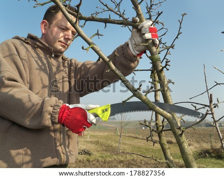 Young gardener pruning apple tree branches with pruning saw - stock photo