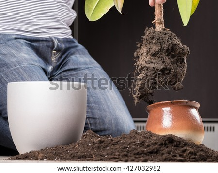 Young gardener transplanting a plant in fertile soil and new big flowerpot - stock photo