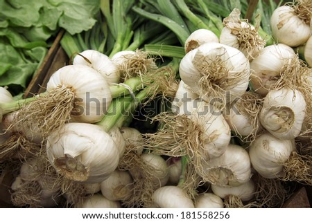 Young garlic for sales at the market