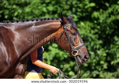 Young german sports horse in summer green background - stock photo