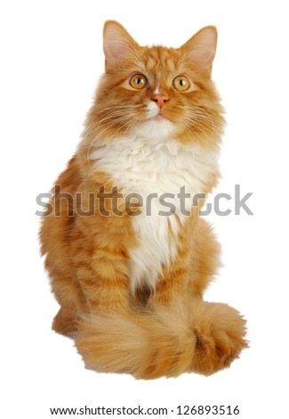 Young ginger cat, isolated on a white background - stock photo