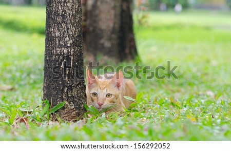 Young ginger tabby cat stalking his prey. - stock photo