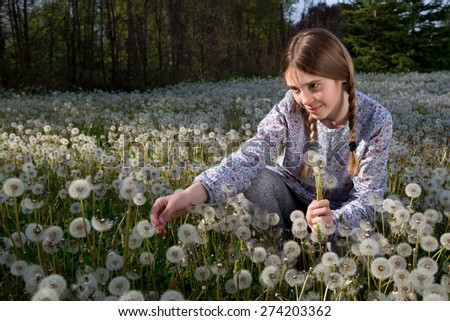 Young Girl Casually Dressed With Two Braids on Her Head Sitting in Dandelions Field on Sunny Day - stock photo