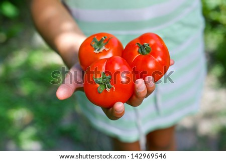 Young girl hand holding organic green natural healthy food produce tomatoes - stock photo
