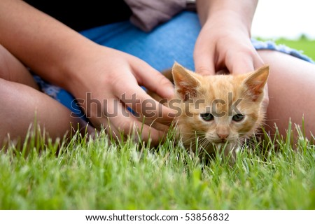 Young girl playing with a kitten in the grass. - stock photo