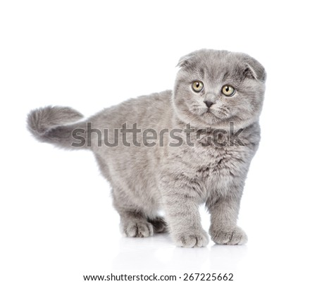 Young gray kitten looking away. isolated on white background