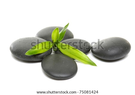 young green bamboo leaf and stones- Tranquil scene.