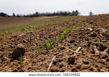 Young green crops close-up growing on dirt on a blurry sunny farmland background landscape - stock photo