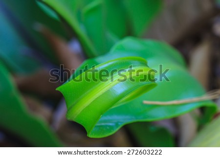 young green fern origin to in the nature - stock photo