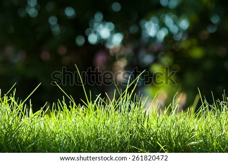 Young green grass illuminated by the sun  - stock photo