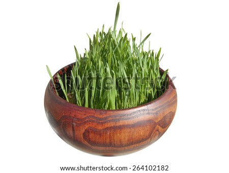 Young green grass in a wooden pot. Young shoots of wheat - stock photo