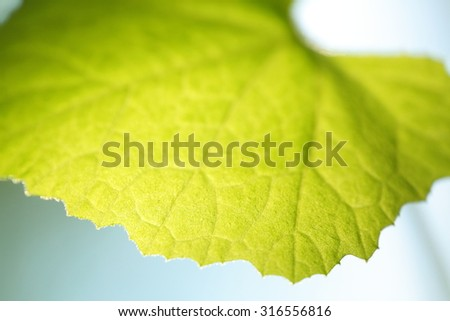 Young green leaf symbolizes infinity and the abstraction of nature. New life in spring. - stock photo