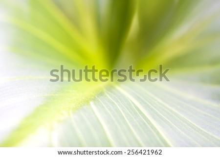 Young green leaf symbolizes infinity and the abstraction of nature. New life in spring. Gentle green background. - stock photo