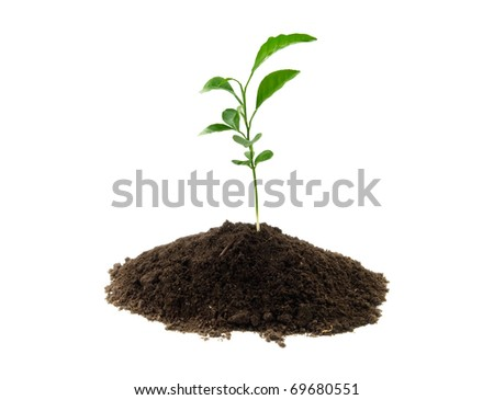 young green plant growing from soil - stock photo