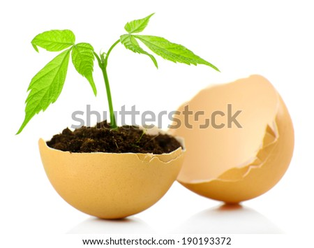 Young green plant growing in eggshell isolated on white  - stock photo