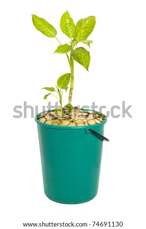 young green plant in a bucket of coins