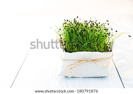 Young green plant in a pot on a white wooden board