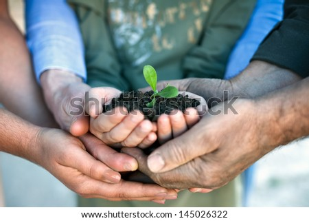 Young green plant in hands, environmental conservation - stock photo