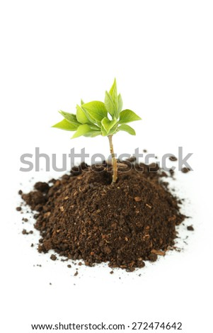Young green plant in soil isolated on white - stock photo