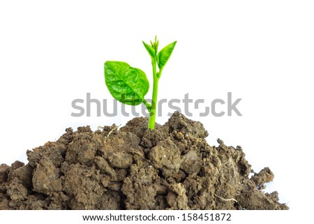 Young green plant isolated on a white background - stock photo