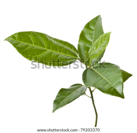 young green  plant  isolated on white