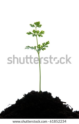 Young green plant isolated on  white background. - stock photo