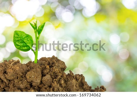 Young green plant of soil - stock photo