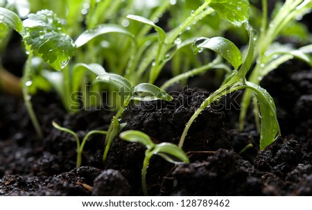 young green plants growing from soil - stock photo