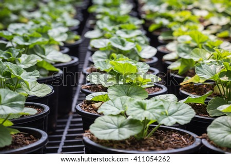 Young green plants in a house plant - stock photo