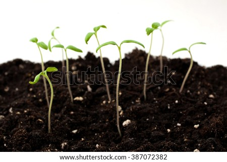 Young green shoots closeup - stock photo