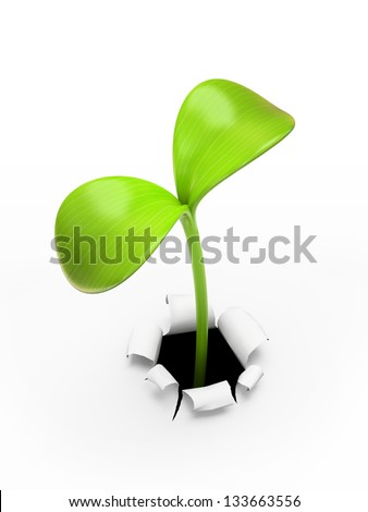 young green sprout - stock photo