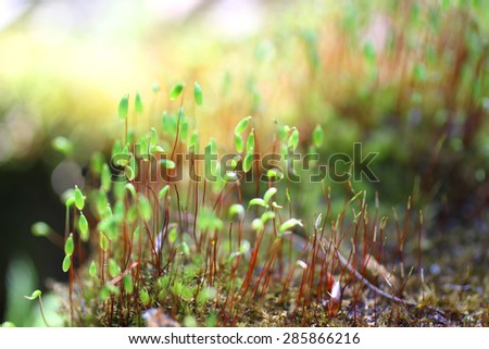Young green sprout ascended from seed in spring - stock photo
