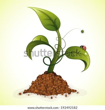 Young Green Sprout from the Ground with Water Drops and Ladybug, illustration - stock photo