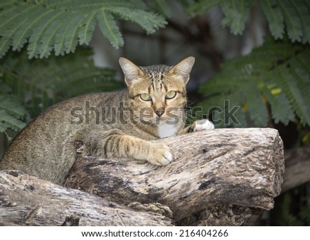 Young grey brown tabby cat with old log, Relaxing time  - stock photo