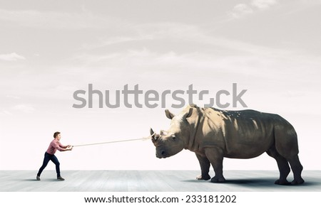 Young guy holding big rhino on lead
