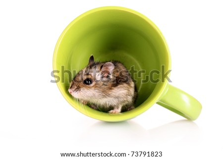 Young hamster in green cup isolated on white - stock photo