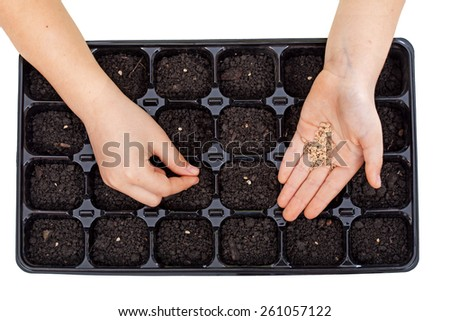 Young hands sowing vegetable seeds in germination tray - growing food, isolated - stock photo