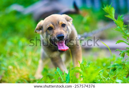 Young happy puppy - stock photo