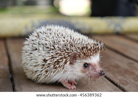 Young hedgehog walking on wooden - stock photo