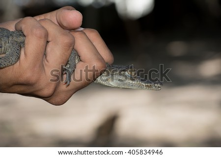 Young holds in his hand a baby alligator while talking on their characteristics - stock photo