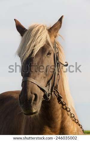 Young horse grazing in a pasture - stock photo