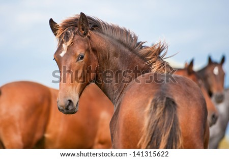 Young horse looking back - stock photo