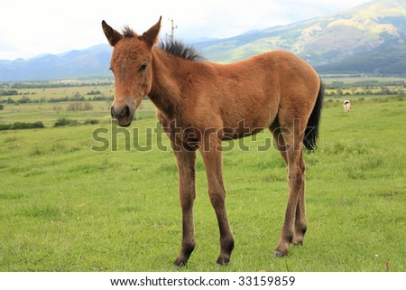 young horse on a green meadow - stock photo